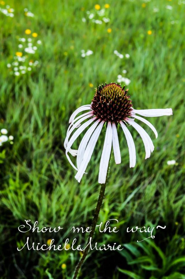 Wildflowerspointing (1 of 1)