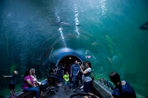 Living Planet Aquarium