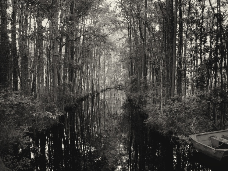 Okefenokee, Swamp, Landscape, Nature, Trees, Reflection, Black and White