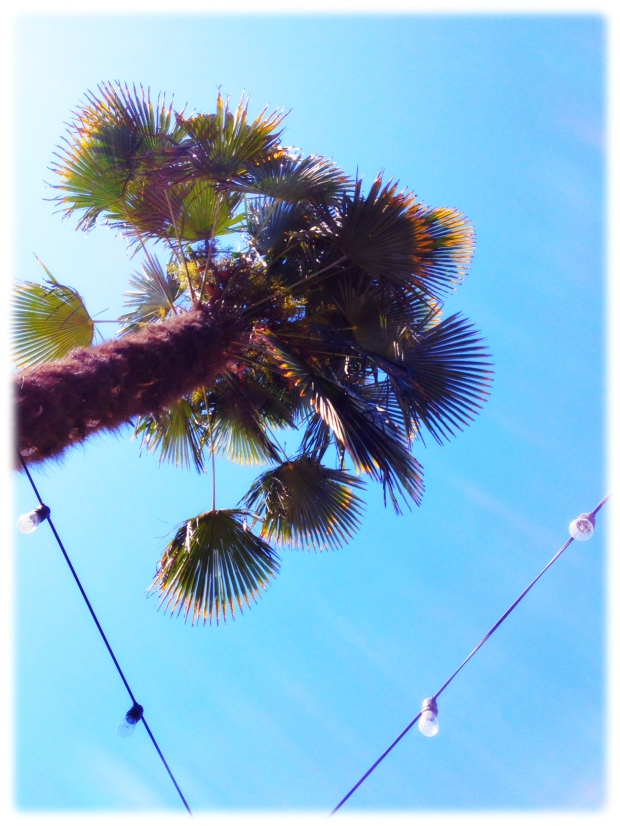Looking up at palm tree from my seat at Picante